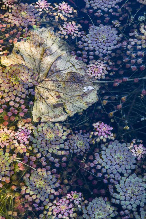 Water Mosaic by Lisa Redburn