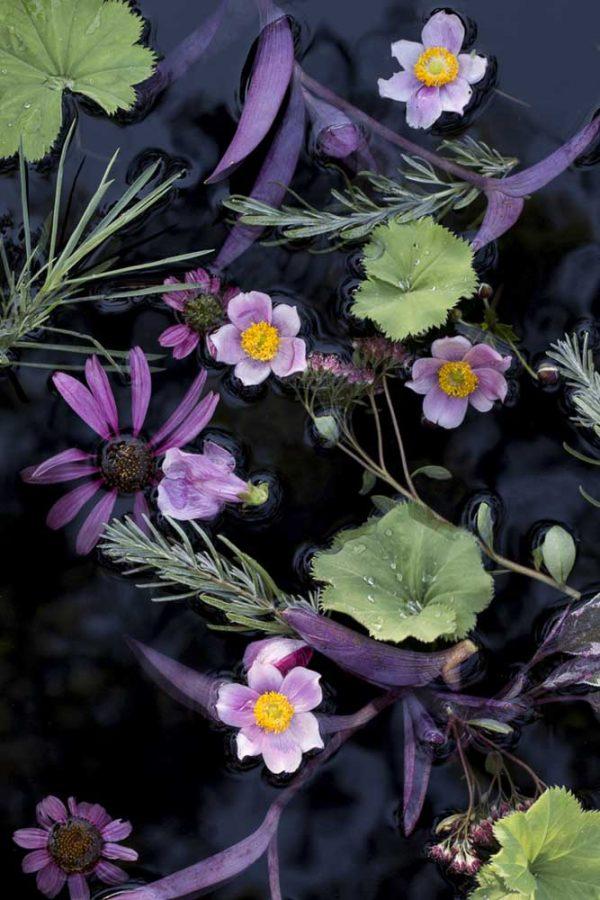 Floating Flora August by Lisa Redburn