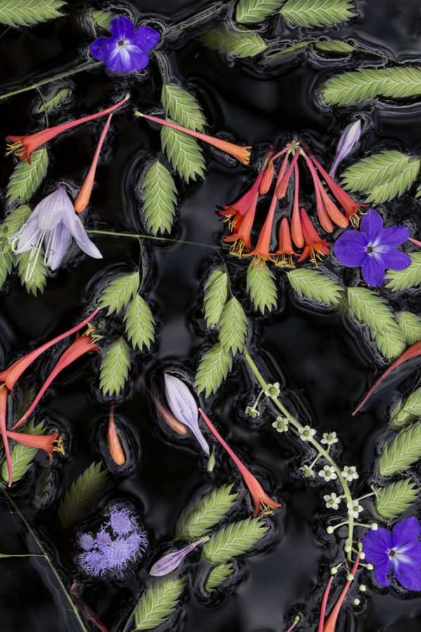 Floating Flora July by Lisa Redburn