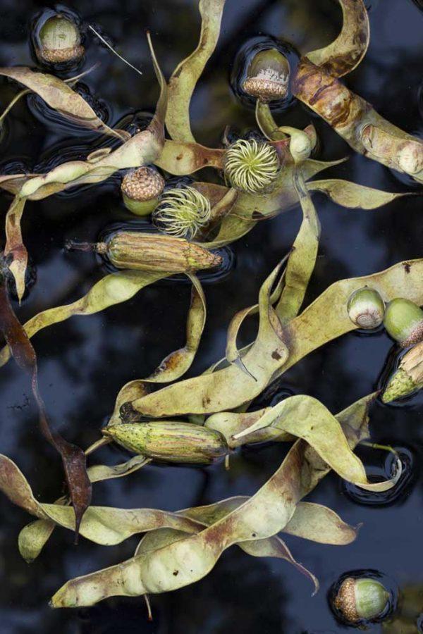 Seedpod Swirl by Lisa Redburn