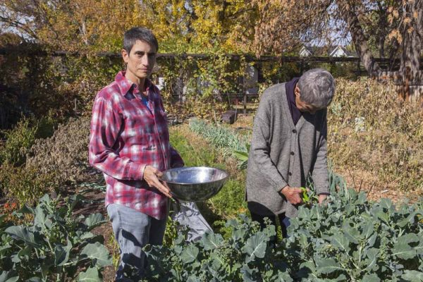 Broccoli Rabe by Laurie Blakeslee