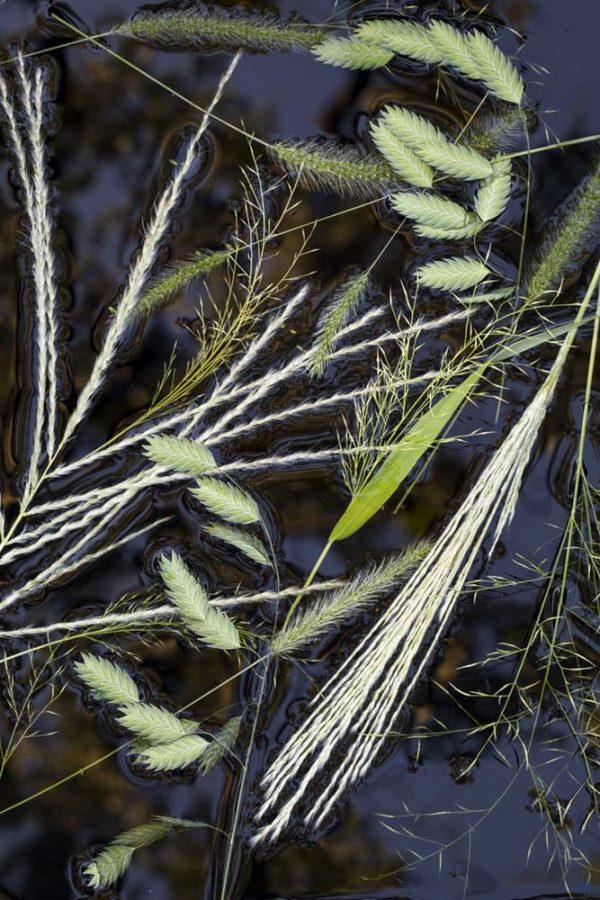 Summer Grasses by Lisa Redburn