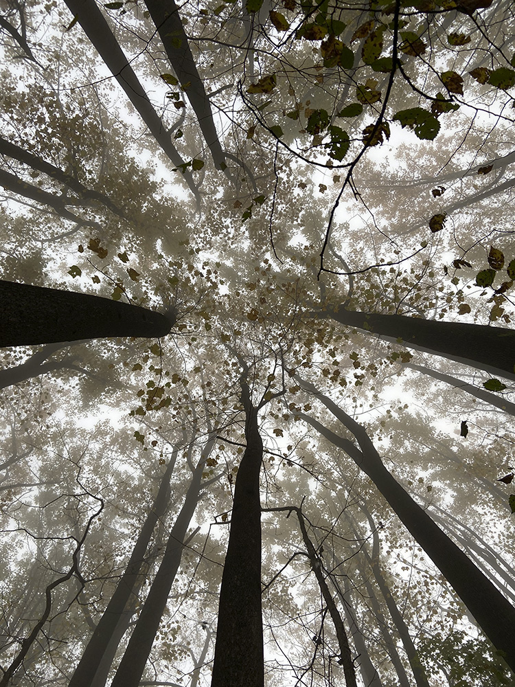 untitled - Hudson Valley (canopy) by Deena Feinberg