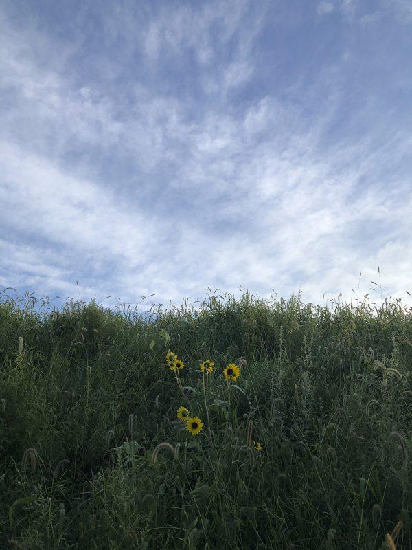 "photograph-717am_Sept42018, pigment print, 16x20"", edition of 5, $350"
