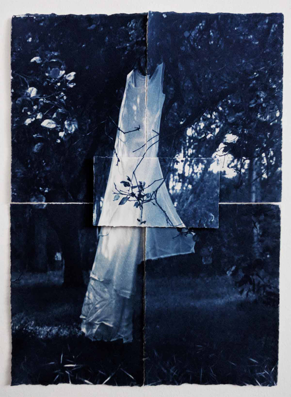 cyanotype, Adrienne Defendi, Entangled