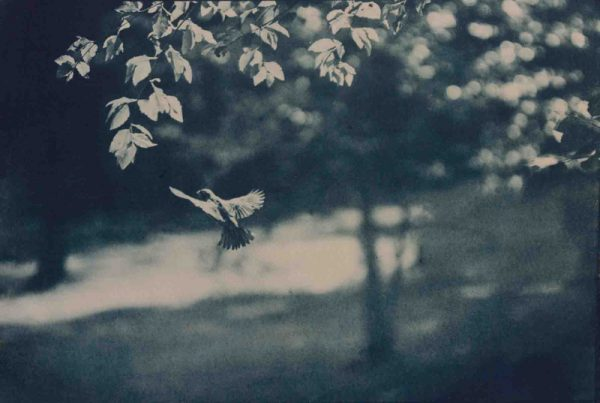 photo, Julia Arstorp, In Flight