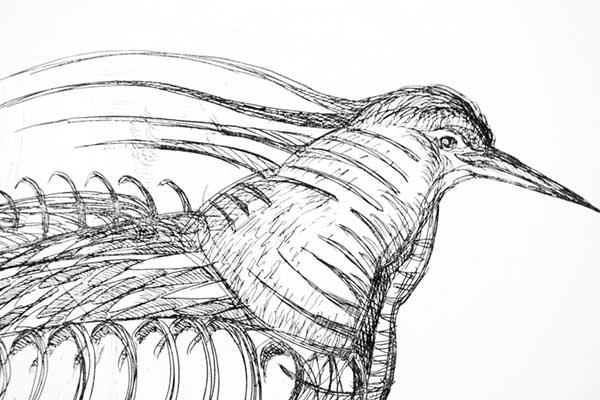 Detail, Bird of Rosendale