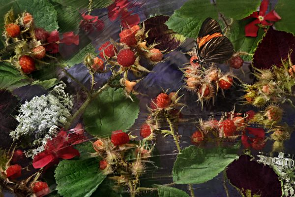 Stuck in the Brambles by Susan Richman